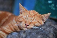 Bild einer Katze, die auf einer anderen schläft.